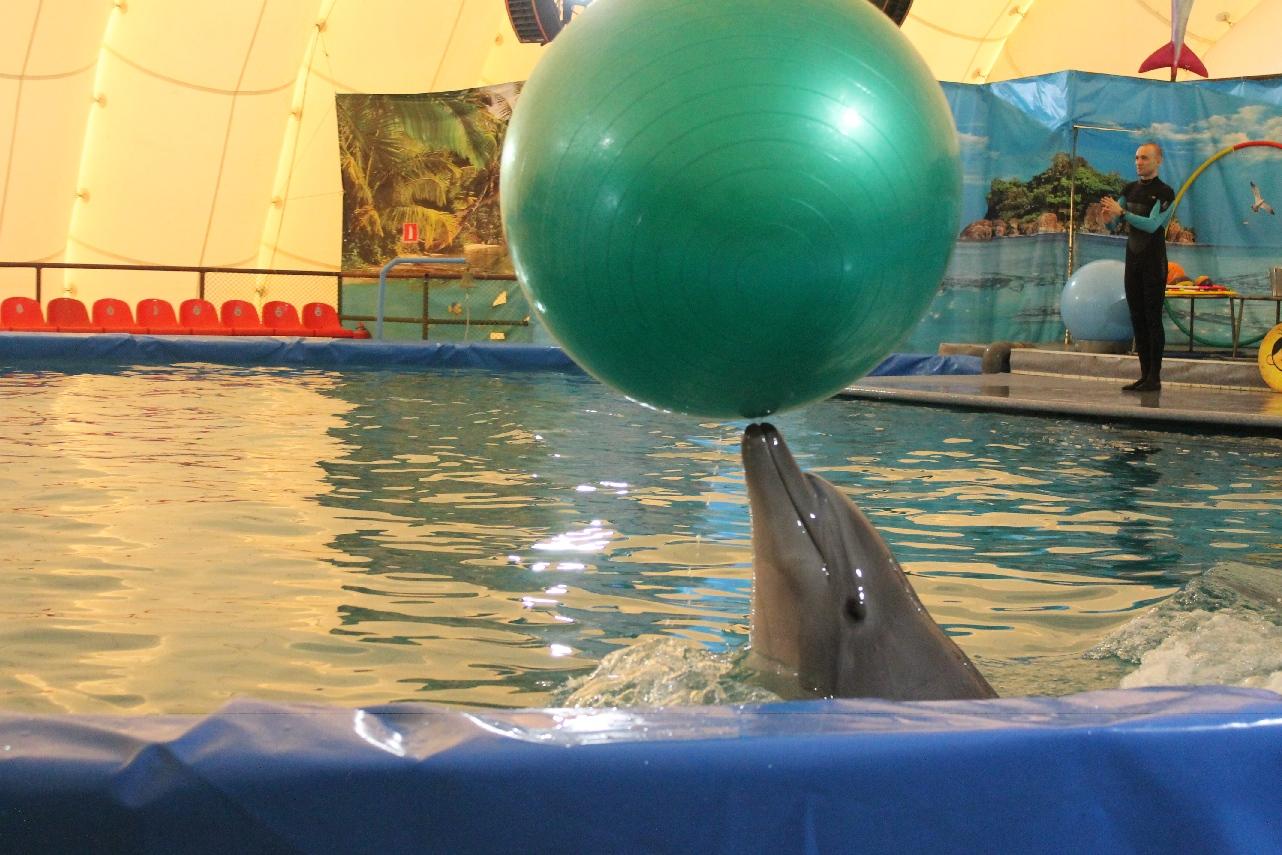 Дельфинарий Екатеринбург