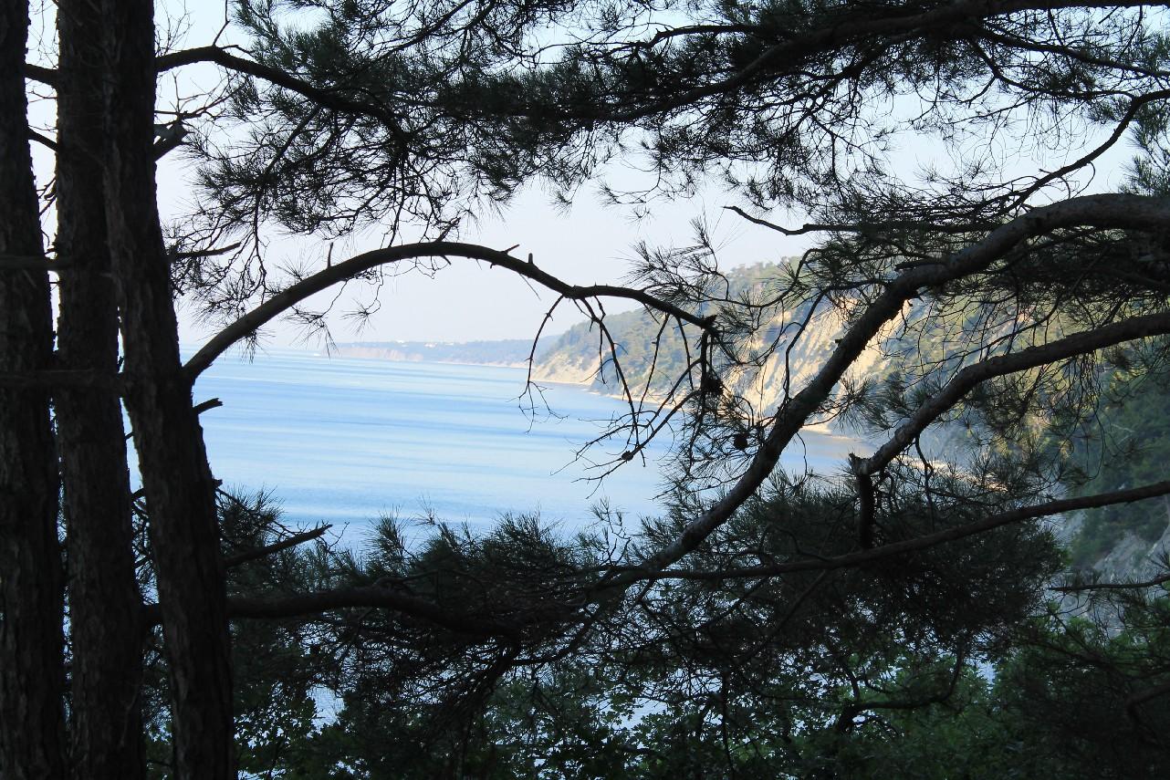 кемпинг Сосновый рай Архипо-Осиповка