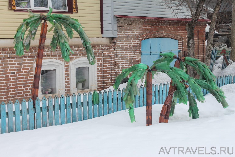 пальмы деревня Мазунино