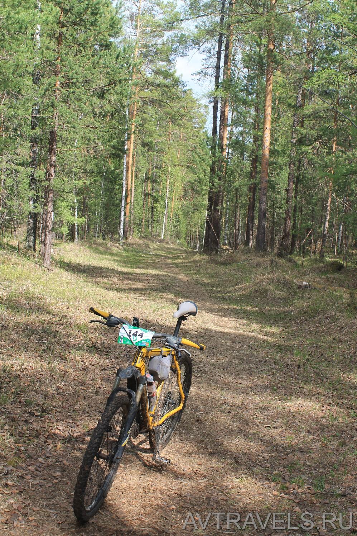 велосипед на лесной дороге