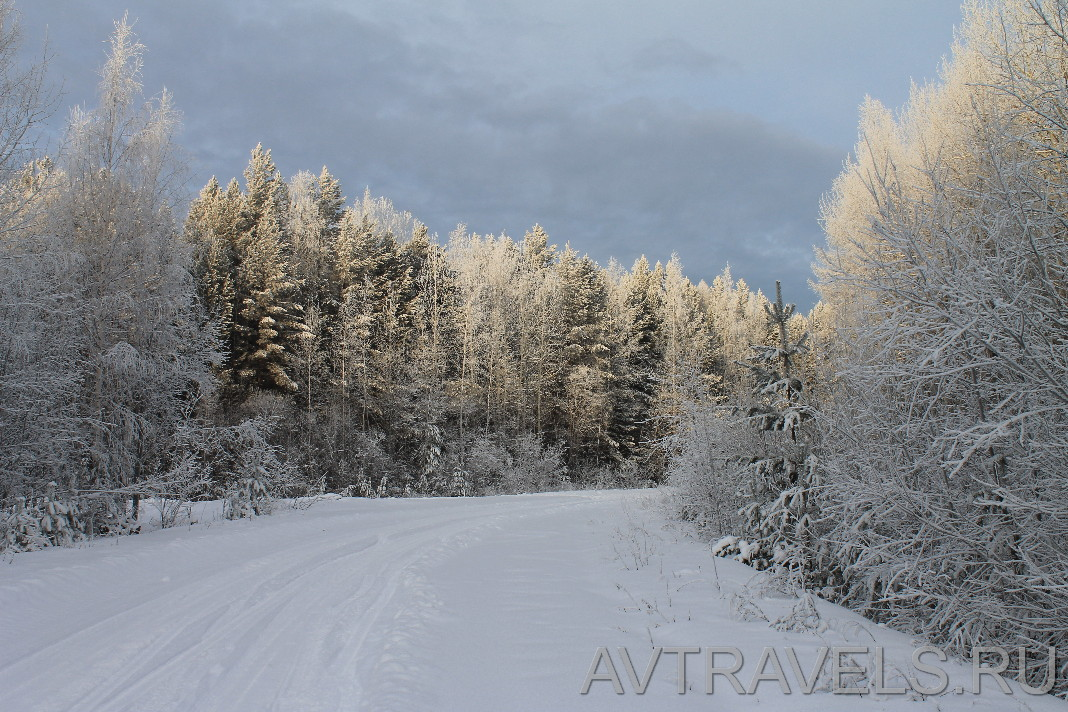заснеженный лес Северный Урал